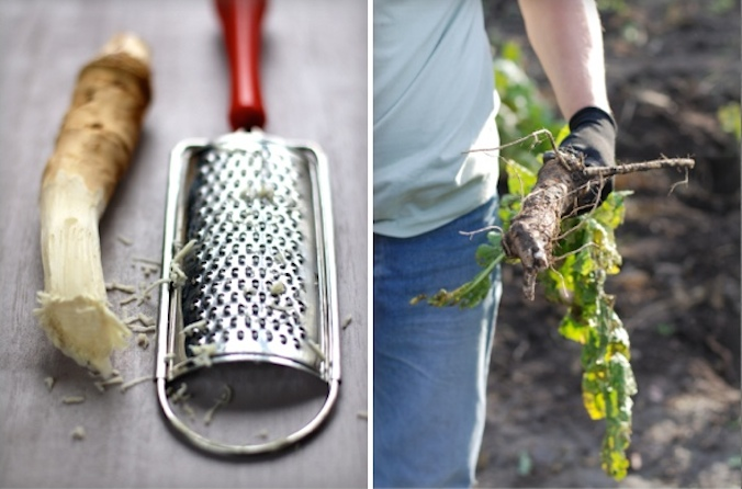 jak uchovat křen
