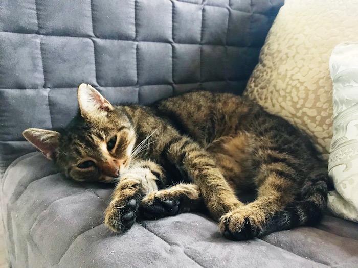 kočka na sedačce